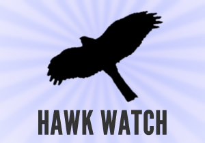 Soaring hawk UK populations are responsible for a large number of racing pigeon deaths each year.<br />If you spot a hawk, peregrine or other raptor in your area, or see signs of an attack from these birds of prey on a racing pigeon, please report it using this online Hawk Watch system.