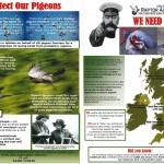 Protect Our Pigeons